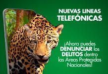 Lineas telefónicas de denuncia