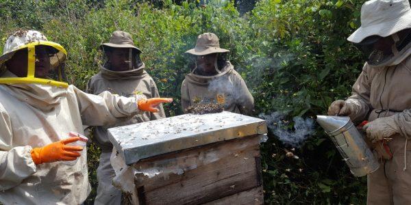 Producción de Miel en la Reserva Nacional de Flora y Fauna de Tariquía