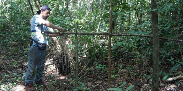 Producción de asaí en la Reserva Nacional de Vida Silvestre Amazónica Manuripi