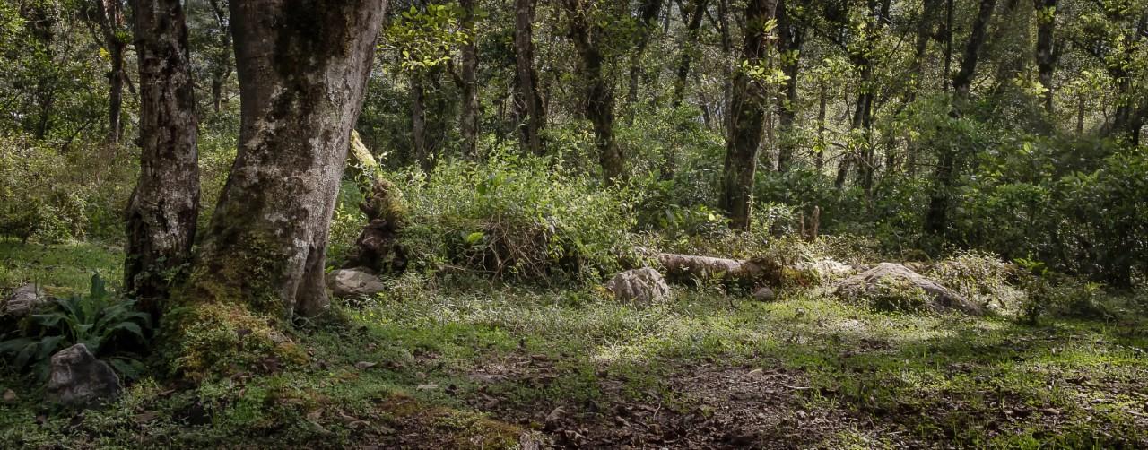 Parque Nacional Carrasco