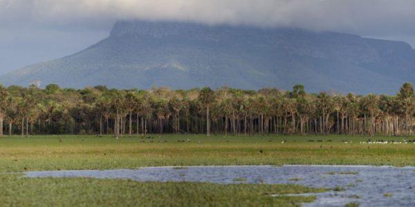 El Parque Nacional y Área Natural De Manejo Integrado Kaa Iya Del Gran Chaco, Sitio Ramsar Palmar de las Islas (Santa Cruz) – Foto: Walter Ridder.