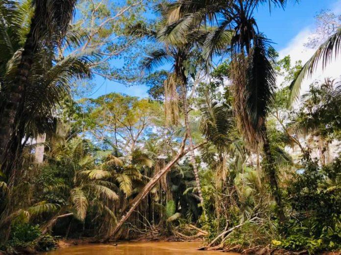 Reserva de la Biosfera y Estación Biológica del Beni
