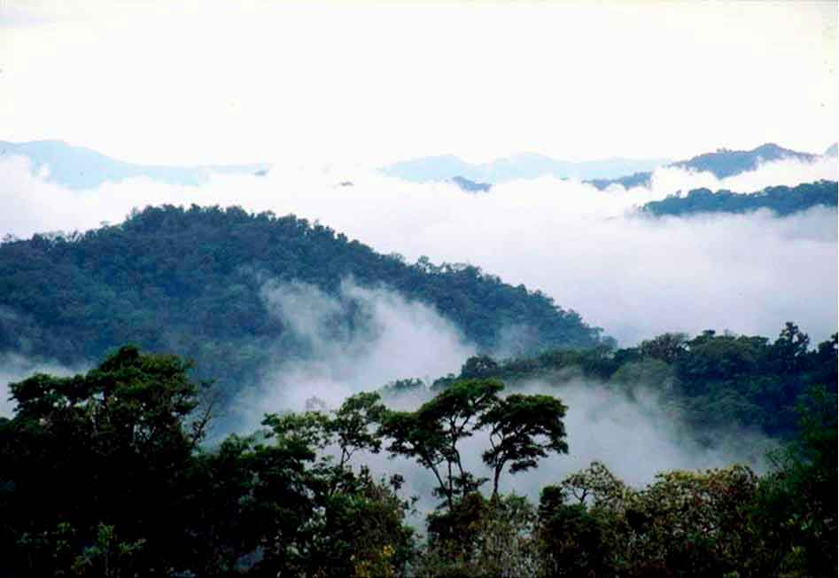 Bosque de Tariquía