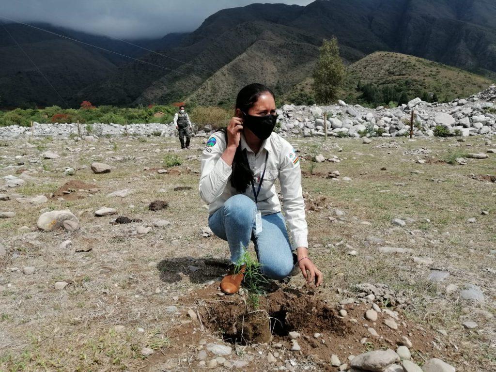 Forestación en la Cordillera de Sama
