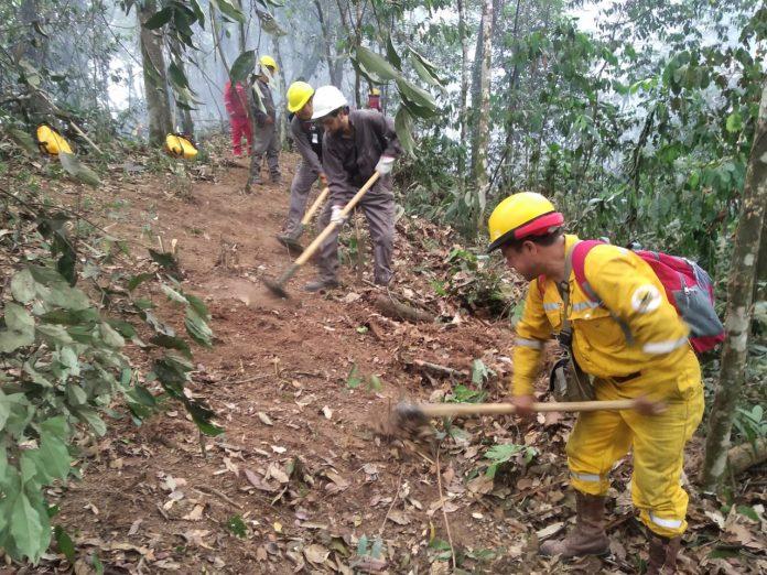 Guardaparques combatiendo incendio