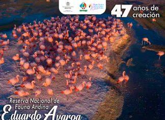 Flamencos en la Reserva Nacional de Fauna Andina Eduardo Avaroa